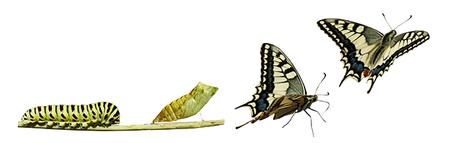 butterfly changes Make money with your website by focusing on visitor conversion